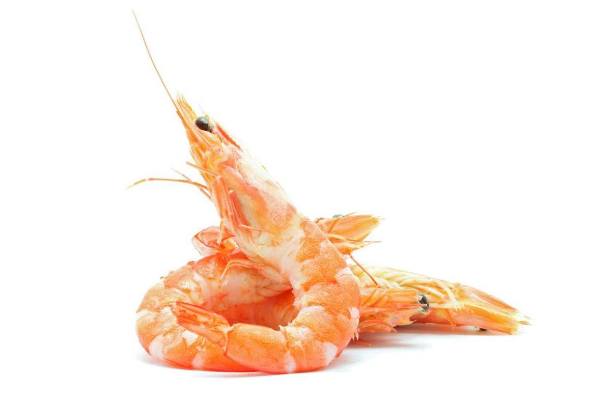 schrimp1